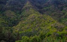 Laurel forest / Laurier bos